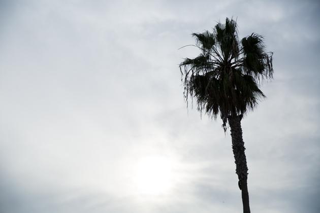 Venice Beach Photo by Mo Summers