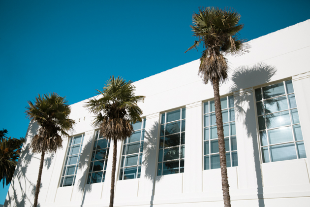 Palm Trees Photo by Mo Summers