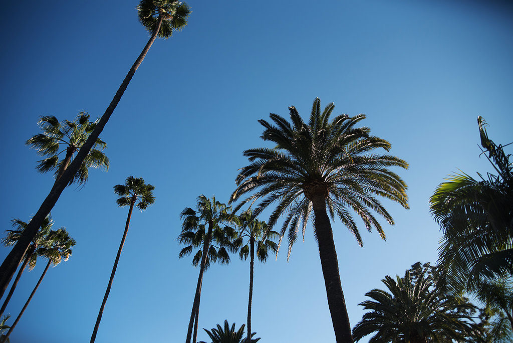 s Palm Beverly Hills Palm Trees Photo by Amina Touray