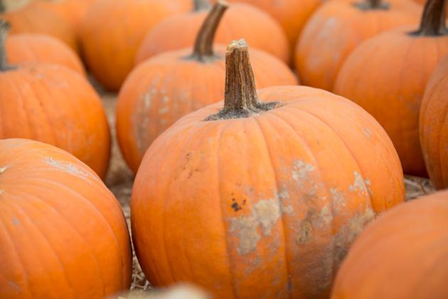 Los Angeles Pumpkin Patch