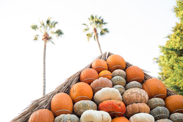 Mr. Bones Pumpkin Patch - Mo Summers Photography
