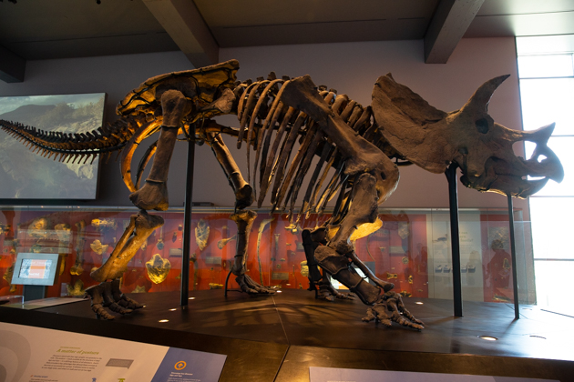 A Visit to The Los Angeles Natural History Museum, Things to do in Los Angeles, Our favorite LA and California hotspots. Los Angeles, California, where to go, where the locals go, travel destinations, things to do with kids, afternoon excursions, Museum Adventures, Dinosaur Exhibit #HowDoYouMuseum