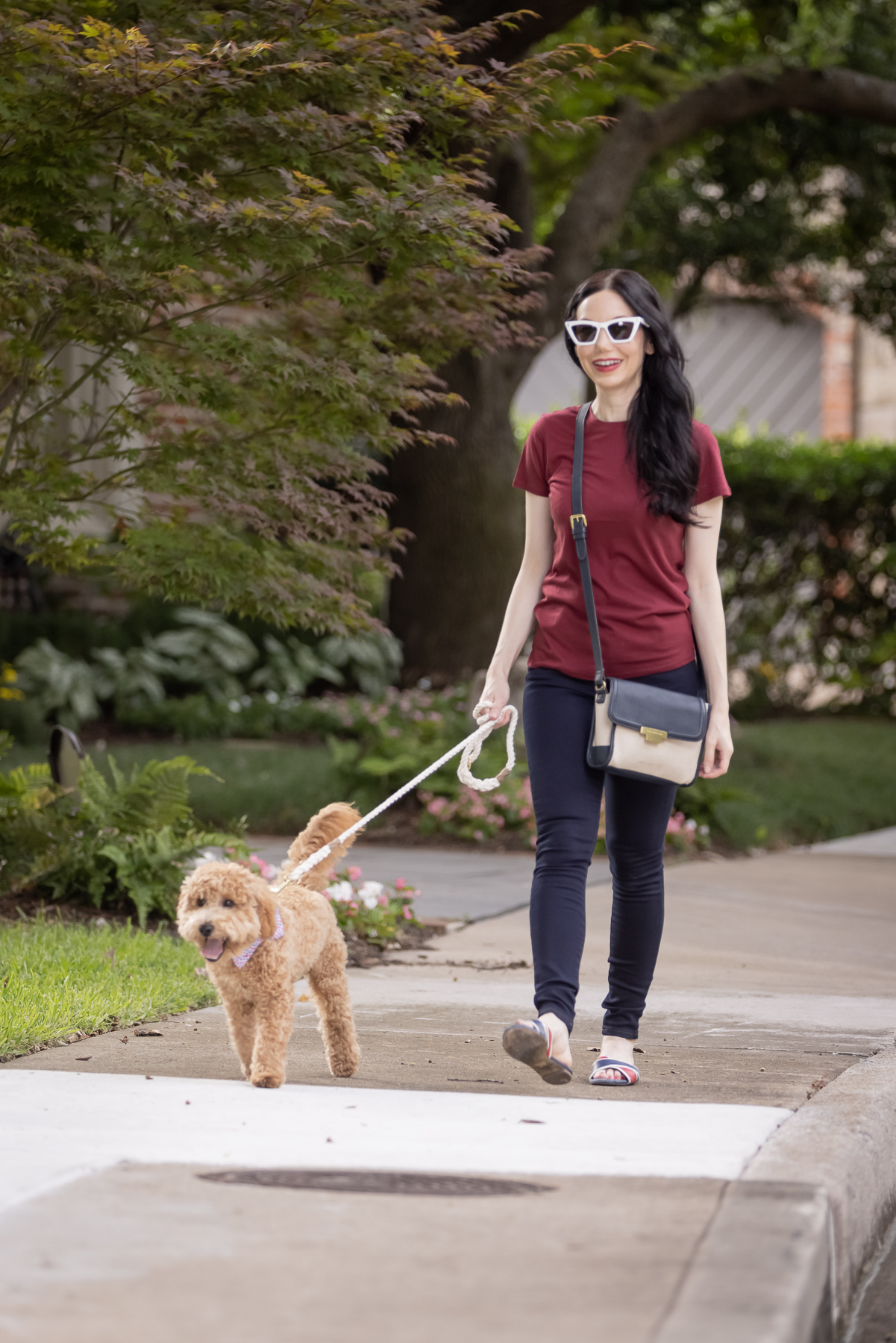 Mott & Bow Jeans and Tee Shirt, Tommy Hilfiger Crossbody Bag, J. Crew Sandals, Italic Cateye Sunglasses, Mini Goldendoodle puppy, Foggy Dog Bowtie, Preppy Style, Dallas Fashion Blogger | Mott and Bow Jeans by popular Dallas fashion blog, Pretty Little Shoppers: image of a woman wearing a crimson t-shirt, Mott and Bow Jeans, blue and red strap slide sandals, and black and tan crossbody bag while walking her doodle breed dog.